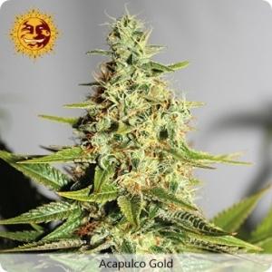 Acapulco Gold - Barney's Farm