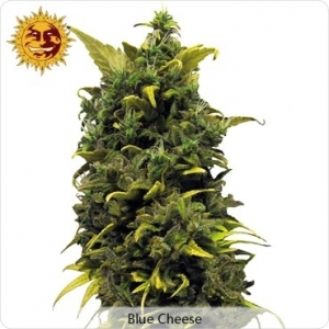 Blue Cheese - Barney's Farm